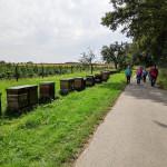 OWK-Buchen Wanderung Einbach